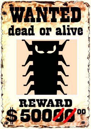 Facebook pagará a hackers que encuentren bugs Facebook-pagar%C3%A1-a-hackers-que-encuentren-bugs1