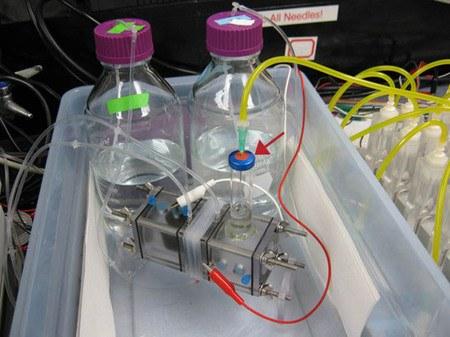 A partir de las celdas microbianas se puede obtener una cantidad ilimitada de hidrógeno