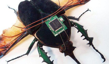 Insectos espías al acecho