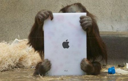 Orangutanes reciben su propio iPad