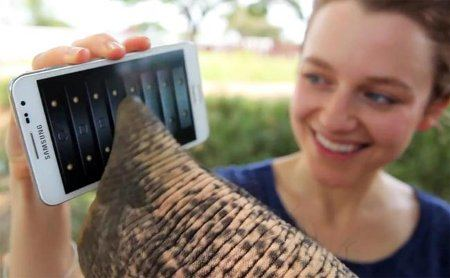 Un elefante jugando con un Samsung Galaxy Note