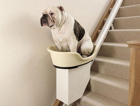 Un elevador para perros