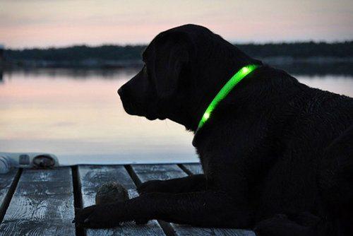 Efectivo collar que te permite encontrar a tu perro en la oscuridad