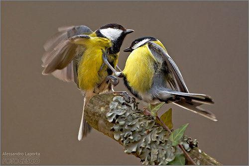 Parece que los pájaros también cuentan con su propio Facebook