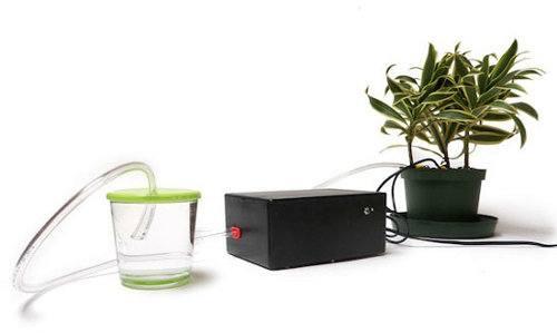 Ahora las plantas pueden regarse a sí mismas