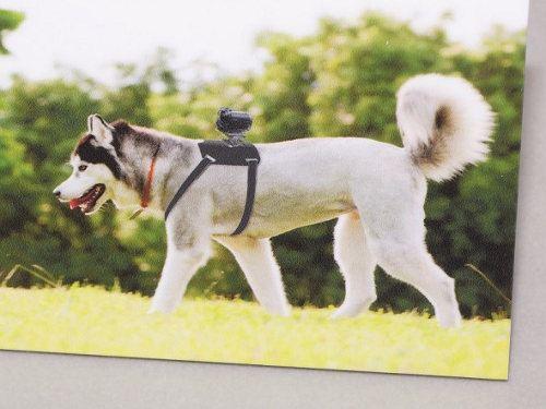 Sony presenta un nuevo arnés para perros