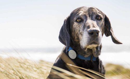 Este collar para perros nos permite saber cómo se siente nuestra mascota