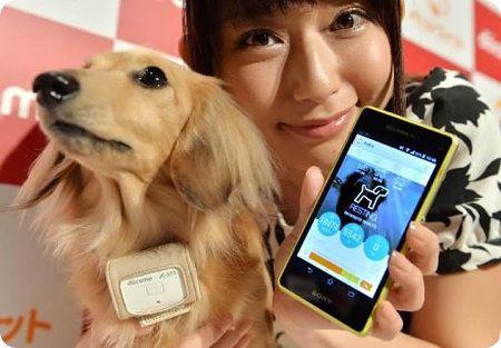 Petfit: el collar que te permite chequear la salud de tu mascota en todo momento