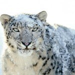 Apple descontinua el soporte para OS X 10.6 Snow Leopard