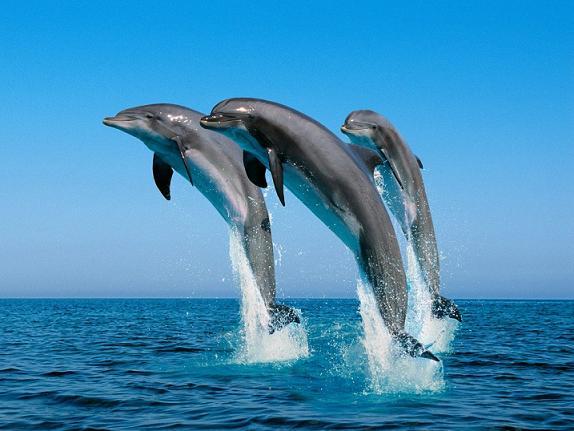cuidar-mares-y-oceanos