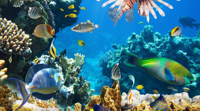 Apps para disfrutar y cuidar de nuestros mares