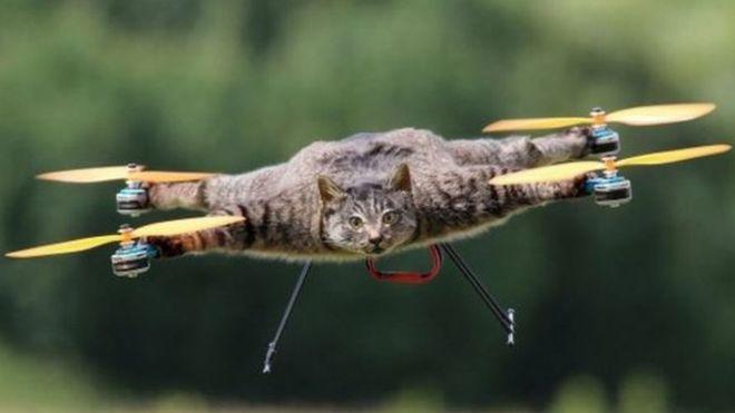 drone con su gato